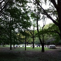 芦花公園 ドッグラン