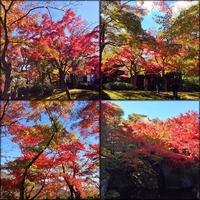 箱根美術館 hakone 強羅 museum autumn ピーク いい日差し 紅葉 おかげ