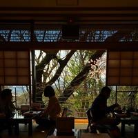 伊豆栄 梅川亭 unagi ueno sakura lunch 窓 桜 花 外 窓の外に...