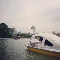 不忍池 Shinobazu Pond uenopark swanboat 不忍池 スワンボート
