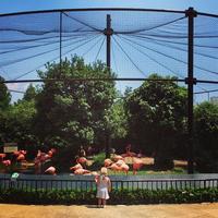 Ueno Zoo uenozoo フラミンゴ シマウマ flamingo 西園 通例 キリン