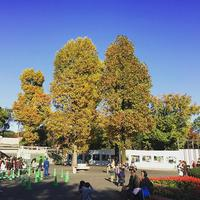 東京都台東区 上野動物園 autumnleaves BEST BUY bluesky 表門