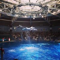 アクアパーク品川 / Aquapark Shinagawa AWS Summit イルカ パス