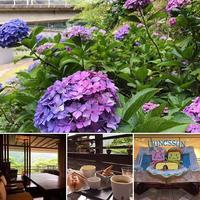 箱根湯本 ユネッサン hydrangea hakone onsen あじさい電車 紫陽花 車窓