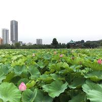 上野恩賜公園 こども動物園 tokyosky uenozoo 上野動物園弁天門 エミュー 蓮池