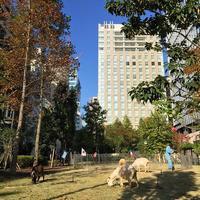ワテラス(WATERRAS) メェー オフィス街 kanda ヤギ 動物園 animal 神田
