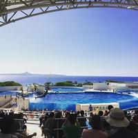 海洋博公園・沖縄美ら海水族館 churaumiaquarium オキ スプラッシュタイム 塩水